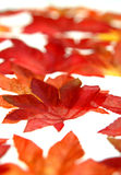 Scattered fall leaves royalty free stock photos