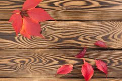 Scattered fallen autumn red leaves. On old worn rustic brown wooden table royalty free stock image