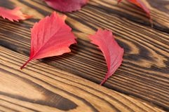 Scattered fallen autumn red leaves. On old worn rustic brown wooden table with copy space stock images