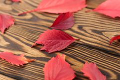 Scattered fallen autumn red leaves. On old worn rustic brown wooden table royalty free stock images