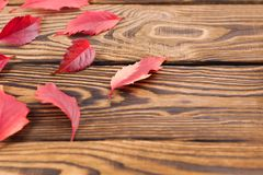 Scattered fallen autumn red leaves. On old worn rustic brown wooden table with copy space royalty free stock photography