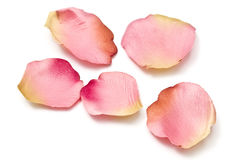 Scattered flower petals isolated on white Royalty Free Stock Images