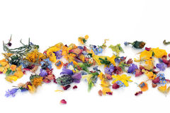 Scattered Flowers and Herbs Stock Photos