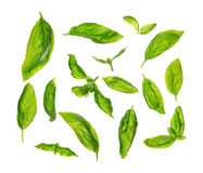 Scattered fresh sweet basil leaves Stock Photography