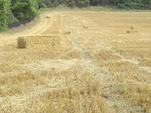 Scattered hay Royalty Free Stock Images