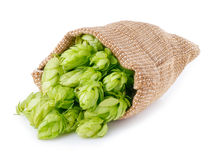 Scattered hop cones isolated on white. Fresh green hops scattered out of the burlap bag isolated on white background. Hop cones isolated on white. Hop for beer royalty free stock photo