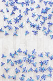Scattered Hyacinth petals. Blue Hyacinth flowers scattered randomly on rustic background. Overhead view with blank space Royalty Free Stock Photography