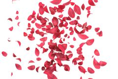 Scattered Leaves on White Stock Photo
