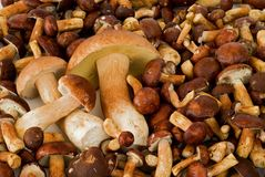 Scattered mushrooms Royalty Free Stock Photos