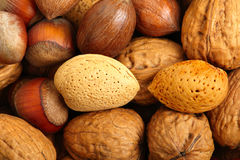 Scattered nuts - 2 Royalty Free Stock Photos