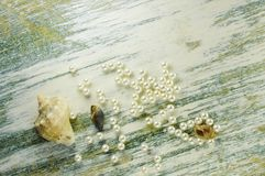Scattered pearl beads and shells. Stock Photos