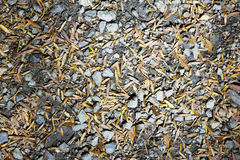 Scattered pebbles and leaves Royalty Free Stock Image