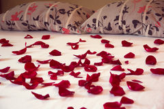 Scattered petals from red roses on a bed. With white sheet and two pillows Royalty Free Stock Photography