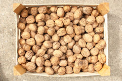 Scattered pile of walnuts, bunch.  Royalty Free Stock Images