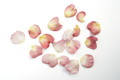 Scattered rose petals. Scattered red and yellow rose petals Royalty Free Stock Photography