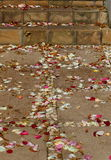 Scattered rose petals. Colorful rose petals scattered on paved steps and a walkway Stock Photography