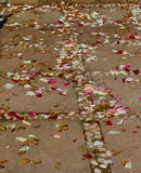 Scattered rose petals. Colorful rose petals scattered on paved steps and a walkway Royalty Free Stock Photos