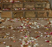 Scattered rose petals. Colorful rose petals scattered on paved steps and a walkway Royalty Free Stock Photography