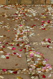 Scattered rose petals. Colorful rose petals scattered on paved steps and a walkway Stock Image