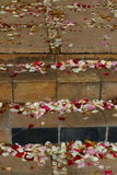 Scattered rose petals. Colorful rose petals scattered on paved steps and a walkway Royalty Free Stock Images
