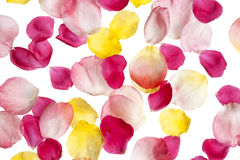 Scattered rose petals Royalty Free Stock Photo