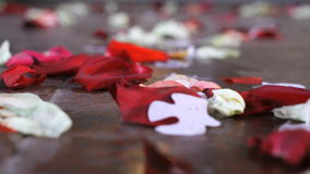Scattered rose petals on the stone stock video