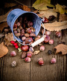 Scattered rosehips, acorns from bucket Royalty Free Stock Photos