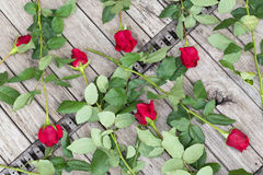 Scattered roses on wooden background, top view Stock Images