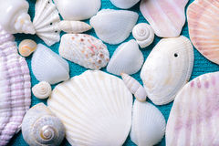 Scattered sea shells Royalty Free Stock Photo