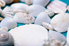 Scattered sea shells Royalty Free Stock Photos