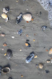 Scattered Shells. Shells with water foam at the beach Stock Photos