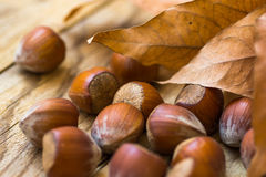 Scattered whole hazelnuts on weathered wood background, dry autumn brown leaves, fall mood, cozy, inspirational Royalty Free Stock Photo