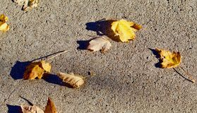 A scattering of autumn leaves on the sidewalk. A scattering of autumn leaves appears on the sidewalk in bright sunlight Stock Photo