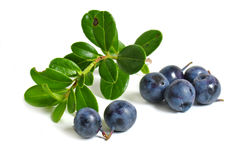 Scattering of bilberries Stock Image