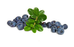 Scattering of bilberries Royalty Free Stock Photo