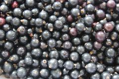 Scattering of black currant as the texture Stock Image