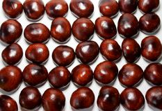 Placer of chestnut seeds in a row. A scattering of dark chestnut seeds on a white background that stand in several rows and are dense to each other Royalty Free Stock Images