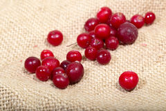 Scattering of the frozen cranberry berries on a sacking Royalty Free Stock Photo