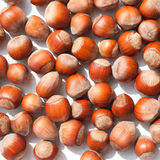 Scattering of hazelnuts Stock Image