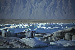 A scattering of icebergs. Jokulsarlon lagoon Iceland Royalty Free Stock Image