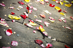 Scattering petal Stock Photography