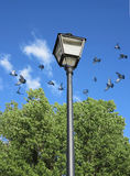 Scattering of pigeons and lantern Stock Photo