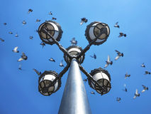 Scattering of pigeons on lanterns Stock Photo