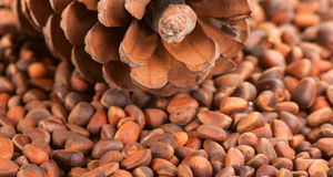 Scattering of pine nuts and a large pine cone. Stock Image