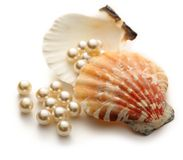 White pearls in seashell Stock Photos