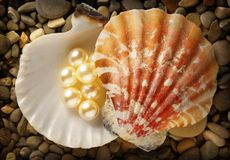 Scattering white pearls in seashell Royalty Free Stock Images