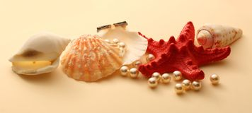 White pearls in seashell Royalty Free Stock Photo