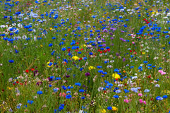 Scattering of the wild flowers. In the park in Paris, France Stock Photo
