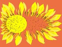 Scatters brilhantes da flor do girassol Foto de Stock