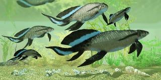 Scaumenacia cuta in Estuary. Scuamenacia is an extinct lobe-finned fish from Quebec, Canada in the Upper Devonian Era Stock Images